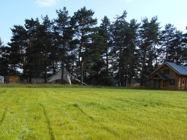 Правила выбора газона